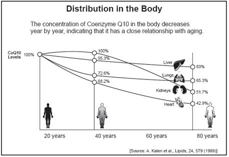 Distribution in the body image