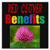 Red-Clover-Benefits-thumb