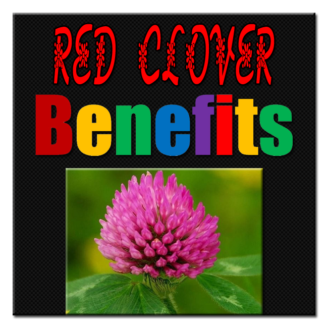 Red-Clover-Benefits image